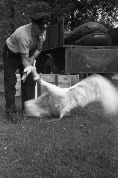 19650107 BF Tierrettung Schwan 1