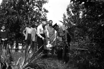 19650107 BF Tierrettung Schwan 2