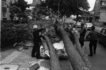 19690707 Baum auf Auto Geismarland 1
