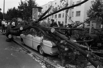 19690707 Baum auf Auto Geismarland