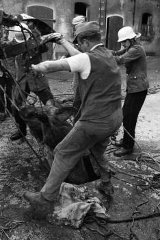 19710909 BF Schweinerettung 2
