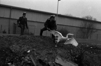 19740218 Polizei Schwanenfang