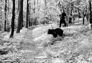 19740824 Bärenjagd Zoo Linne