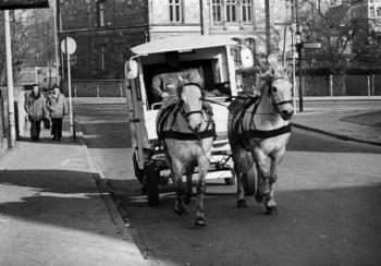 19770900 Pferde Schneeweiss