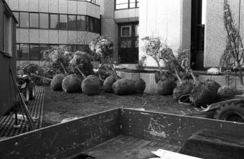 19781120 Bäume Rathaus 1