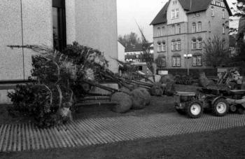 19781120 Bäume Rathaus