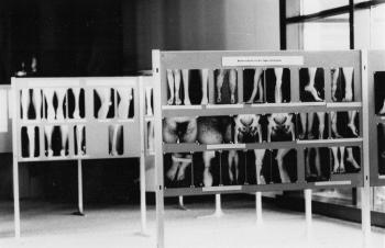 19820917 Kongress Lymphologie 2