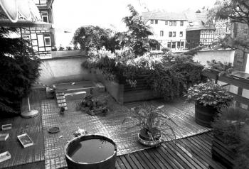 19840614  Ente brütet auf Dachgarten 1