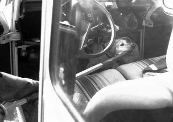 19850305 Hund im Auto 1
