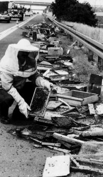19910729 Unfall Bienen BAB 2
