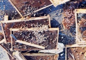 19910729 Unfall Bienen BAB 8