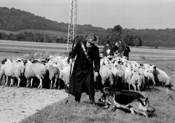 19910820 Schafe Schäferprüfung