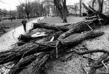 19930125 Sturmschaden abgetragener Wall