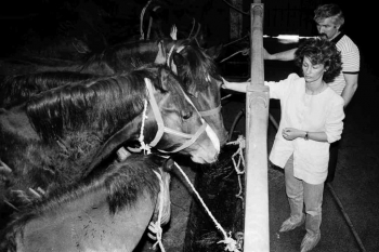 19930422 Hiltrud Schröder rettet Pferde