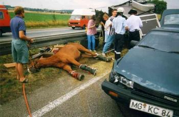 19950728 BAB Pferderettung 1
