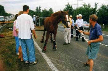 19950728 BAB Pferderettung 2