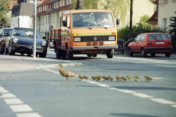 19980320 Tiere Enten